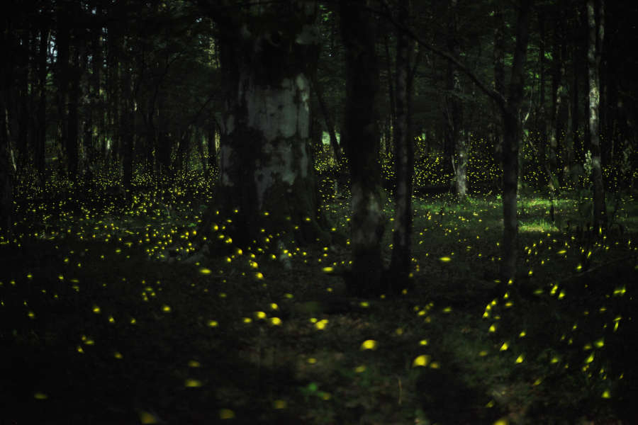 Fairy night in forest