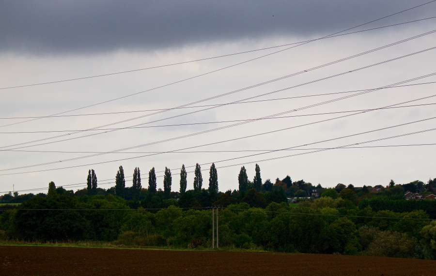 The 'Poplar' Energy Choice?..