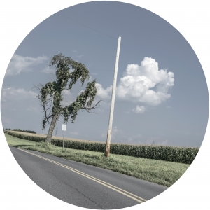Tree Corn Pole and a Lyrical Cloud - Rondel