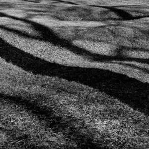 shadows in the grass 2018