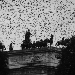 Starlings on the Arco della Pace, Milan